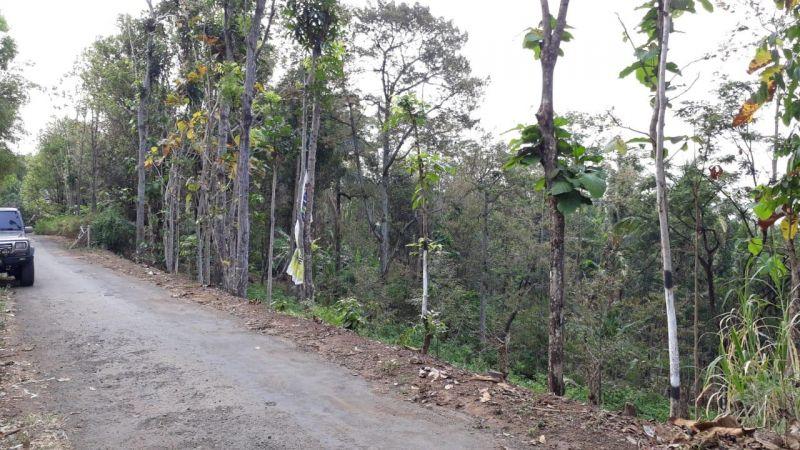 Tanah usaha kebun duren durian jombang jawa timur