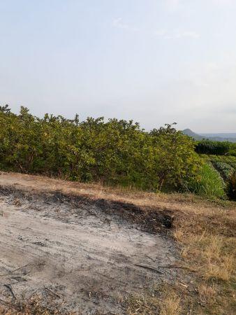 Tanah Murah Luas Di Desa Lasah, Tawangargo, Karangploso ...