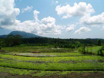 Tanah Dijual di Gianyar