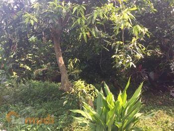 Tanah Kavling Murah Dijual di Pondok Gede